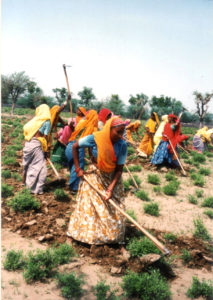 ヘナ畑の女性